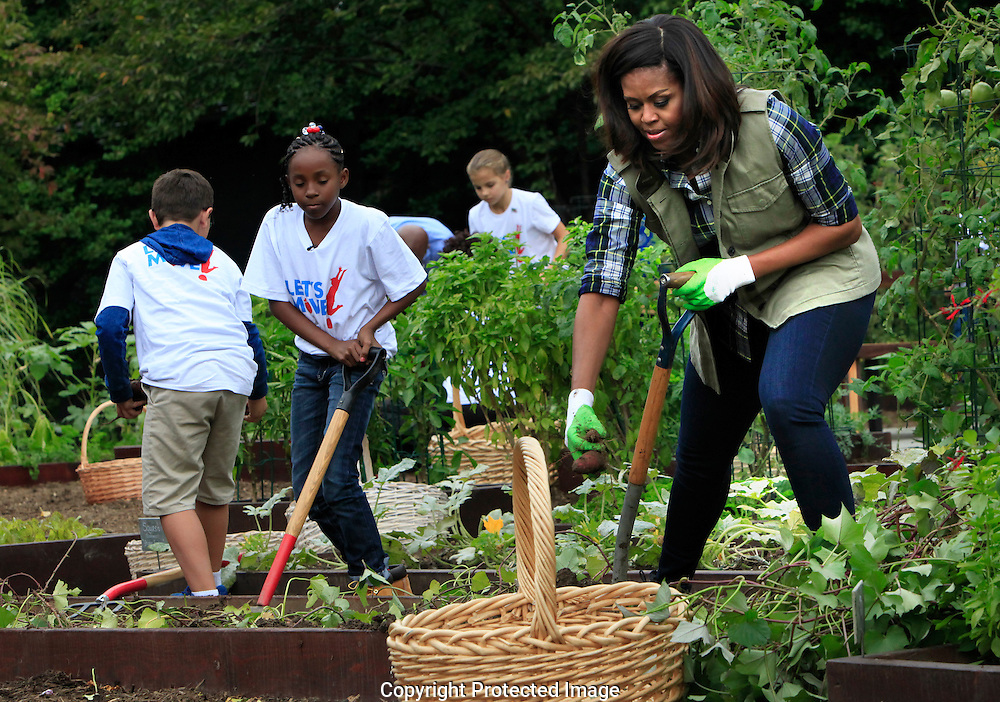 First Lady Michelle Obama works in the  White House Kitchen Garden on the South lawn of the White House.  Photo by Dennis Brack