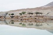 Israel, Dead Sea, Palm trees on the shore of the lake reflect in the calm water