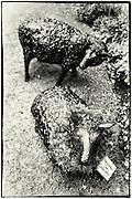 Sheep sculpture at Cotehele