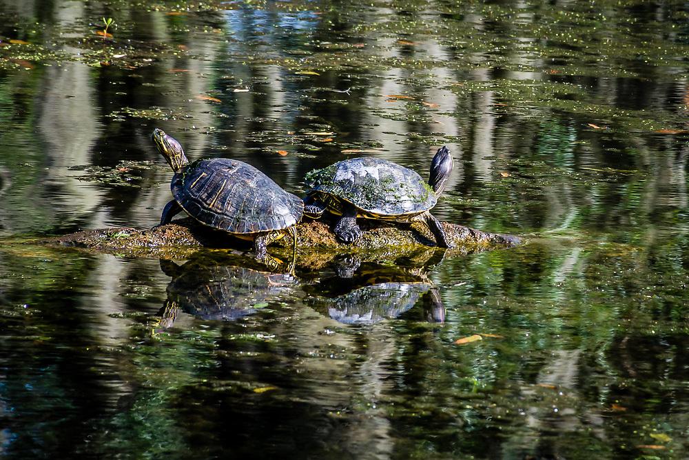 Audubon Park in New Orlean