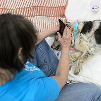 Paula Olsen, a volunteer from Western Slope Colorado, comforts Domina as she wakes up from her surgery in the Pinehill Firehouse  Friday. RezDawg Rescue, collaborating with La Plata animal shelter in Durango as well as local volunteers helped put on this three day low income spay/neuter clinic.
