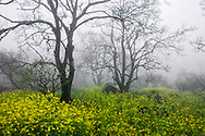 Vietnam Images-landscape-Sapa-Flower Hoàng thế Nhiệm Phong cảnh Sapa