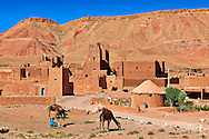 Camels in front of the Glaoui Kasbah's of Tamedaght in the Ounilla valley set surrounded by the hammada (stoney) desert in the foothills of the Altas mountains, Tamedaght, Morroco. .<br /> <br /> Visit our MOROCCO HISTORIC PLAXES PHOTO COLLECTIONS for more   photos  to download or buy as prints https://funkystock.photoshelter.com/gallery-collection/Morocco-Pictures-Photos-and-Images/C0000ds6t1_cvhPo<br /> .<br /> <br /> Visit our ISLAMIC HISTORICAL PLACES PHOTO COLLECTIONS for more photos to download or buy as wall art prints https://funkystock.photoshelter.com/gallery-collection/Islam-Islamic-Historic-Places-Architecture-Pictures-Images-of/C0000n7SGOHt9XWI
