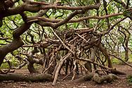 simple shelter built with tree trunks and branches in the nature reserve de Manteling near Domburg on Walcheren, Zeeland, Netherlands.<br /> <br /> einfacher Unterstand aus Baumstaemmen und Aesten im Naturschutzgebiet de Manteling bei Domburg auf Walcheren, Zeeland, Niederlande.