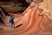 "The Wave, Coyote Buttes, located on the Arizona side of Paria Canyon-Vermilion Cliffs Wilderness Area, which is public land managed by the United States BLM. Over 190 million years, ancient sand dune layers calcified into rock and created ""The Wave."" Iron oxides bled through this Jurassic-age Navajo sandstone to create the salmon color. Hematite and goethite added yellows, oranges, browns and purples. Over thousands of years, water cut through the ridge above and exposed a channel that was further scoured by windblown sand into the smooth curves that today look like ocean swells and waves. For the permit required to hike to ""The Wave"", contact the US Bureau of Land Management (BLM), who limits access to protect this fragile geologic formation."