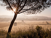 Rural countryside in Umbria on a misty morning, under a hilltop town near Solomeo in Italy