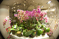 Orchids, Winter in Oslo Norway