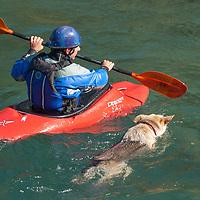 Kayaker David Manning paddles beside his dog in the Kananaskis River near Calgary, Alberta, Canada.