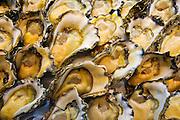 Fresh rock oysters for sale at Sydney Fish Market, Darling Harbour, Australia