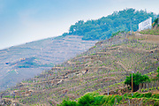 Terraced vineyards in the Cote Rotie district around Ampuis in northern Rhone planted with the Syrah grape. A sign saying E Guigal.  Ampuis, Cote Rotie, Rhone, France, Europe