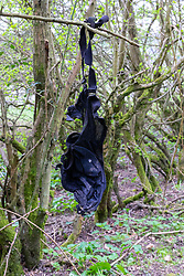 A discarded black bra dangles from a twig on the side of the cycle path used as a dogging spot - a place where people meet to have sex with strangers, just off the A26 at Eridge near Tonbridge Wells in Kent. March 27 2019.