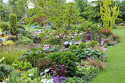 Planting around pond in May. Central tree is Robinia pseudoacacia 'Twisty Baby' syn. R.p. 'Lace Lady'. Wooden jetty, decorative slate pillars