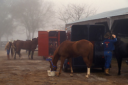 People caring for their horses on a early foggy morning