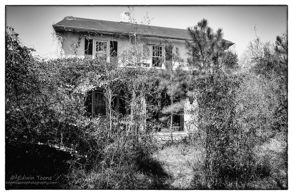 A closer look reveals the home that is invisible from the road. Why it was abandoned is unclear but the new residents are plants and animals.