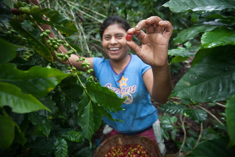 Maritza Sanchez, 22, is picking coffee on a farm at El Balsamo that is part of the Arca de Noe Coop. The coffee-producing coop Arca de Noe in San Juan de Rio Coco, Nicaragua, is Fairtrade-certified.