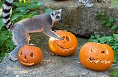 2021_10_13_Zoo_Halloween_SCH