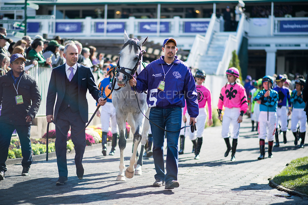 November 3, 2018: Breeders' Cup Horse Racing World Championships. Disco Partner in the paddock.