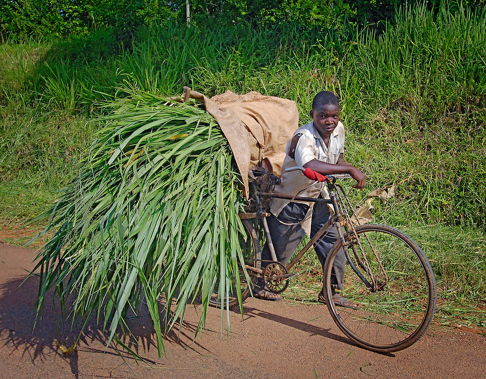 We saw many bikes in Uganda, but not many people riding them.  They were leveraged to carry goods to and/from market....
