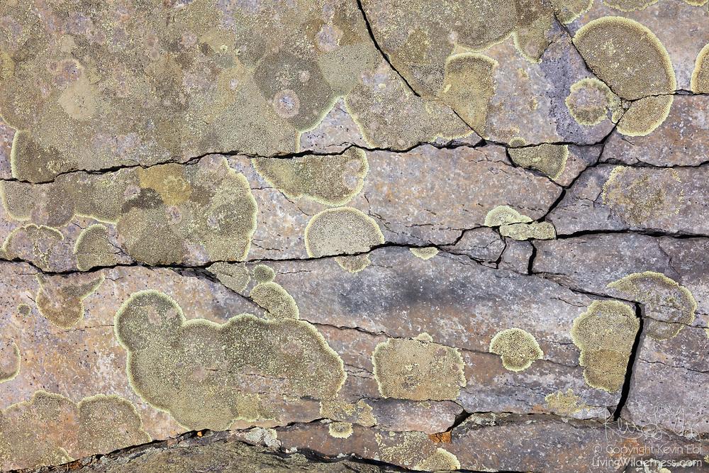 Lichen grows on exposed rock at Blackrock Summit in Shenandoah National Park, Virginia.