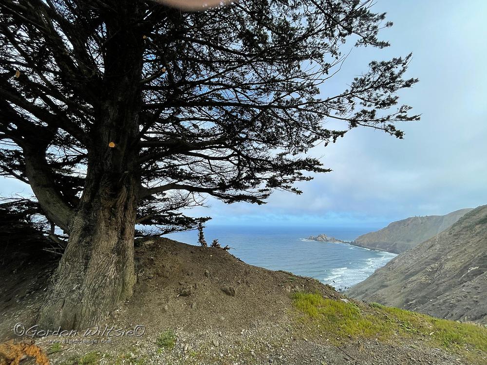 A cypress tree overlooks the California coast near Half Moon Bay.