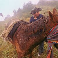 While packing up in the rain, a horseman for a National Geographic archaeology expedition blindfolds a half-wild horse to keep it from bucking while he loads it for a hard day on the trail in the Cordillera Vilcabamba, Andes Mountains, Peru.