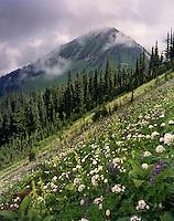 Meadow slopes of Liberty Cap, Glacier Peak Wilderness Washington USA