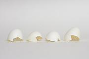still life with white broken egg shells