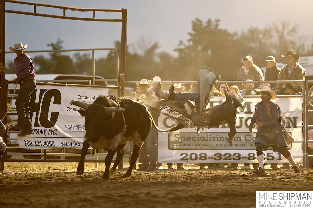 A bull rider gets thrown off in a cloud of dust, with a rodeo clown to assist, Eagle Rodeo, Eagle, Idaho, USa