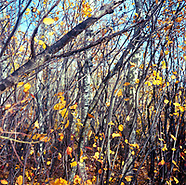 Film | 120mm Fort Whyte/Clear Lake autumn, Manitoba