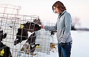 """ELDORADO, WI – FEBRUARY 2: Janet Clark pets a young calf at Vision Aire Farms on February 2, 2017. Clark reached out to Senator Tammy Baldwin (D-WI) for assistance regarding companies using of the word """"milk"""" to describe plant-based beverages such as soy milk and almond milk."""