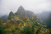 Foggy view of the Inca ruins at Machu Picchu, Peru, with yellow flowers in the foreground.