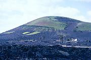 Vineyard grapes growing volcanic hillside black rock, La Geria, Lanzarote, Canary Islands, Spain