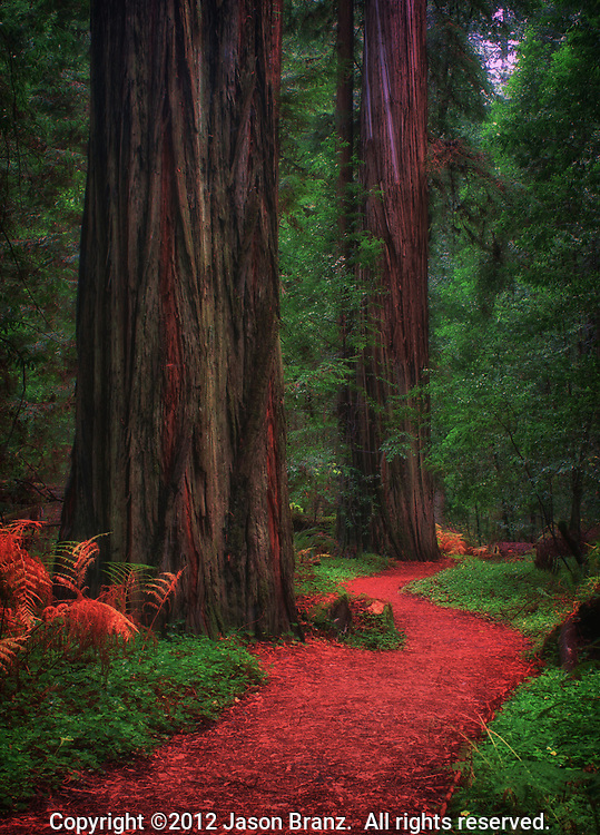 Trail through redwood forest, Humboldt Redwoods State Park, Humboldt County, California.