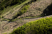 Woman jogging along the cliff paths on the North Coast in Spring in Jersey, Channel Islands