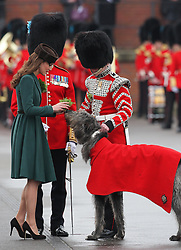 Catherine, Duchess of Cambridge gives Conmeal the regimental mascot of the Ist Battalion Irish Guards a  sprig of shramrock during a St Patricks Day Parade at Mons Barracks, Aldershot, Saturday 17th March 2012. .Photo by: Stephen Lock / i-Images.