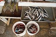 Bait fish on sale at the Mercado de Mariscos (Fish Market) in Ensenada, Baja California Norte, Mexico.