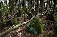 tank traps of the Siegfried line south of Aachen, North Rhine-Westphalia, Germany.<br /> <br /> Panzersperren des Westwall suedlich von Aachen, Nordrhein-Westfalen, Deutschland.