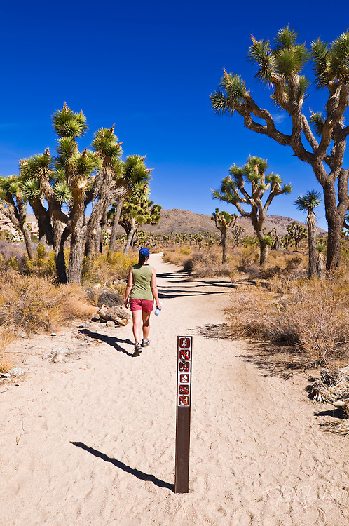 Hiker on the trail to the Wall Street Stamp Mill, Joshua Tree National Park, California