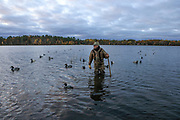 """Dave Evenson examines 49 wooden decoys at MacQuarrie Site No. 2, """"MacQuarrie Point"""" at Shallow Bay, Washburn County, WI. Eleven of the decoys in the spread were owned and used by Gordon MacQuarrie and the ODHA, Inc."""