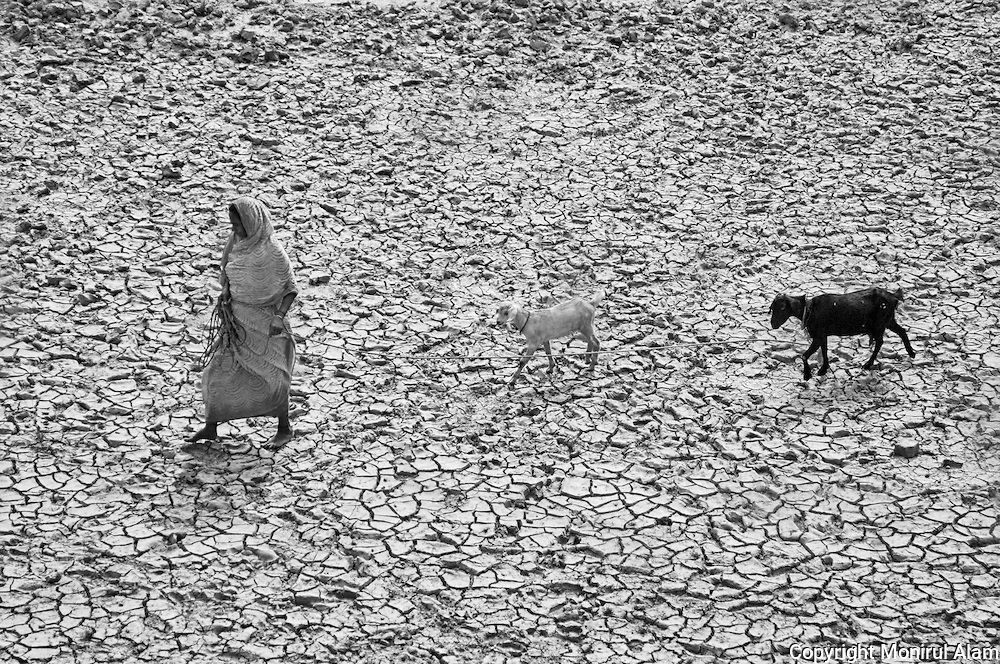 Keraniganj. Bangladesh. (2009). Maharjan searching a grazing ground to feed goats. Bangladesh ranks first as the nation most vulnerable to the impacts of climate change. Scientists expect rising sea levels to submerge 17 percent of Bangladesh's land and displace 18 million people in the next 40 years.