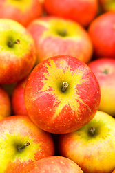 Apple 'Discovery' - Malus