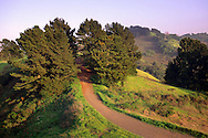 Sea view Trail, Tilden Regional Park, Berkeley Hills, California
