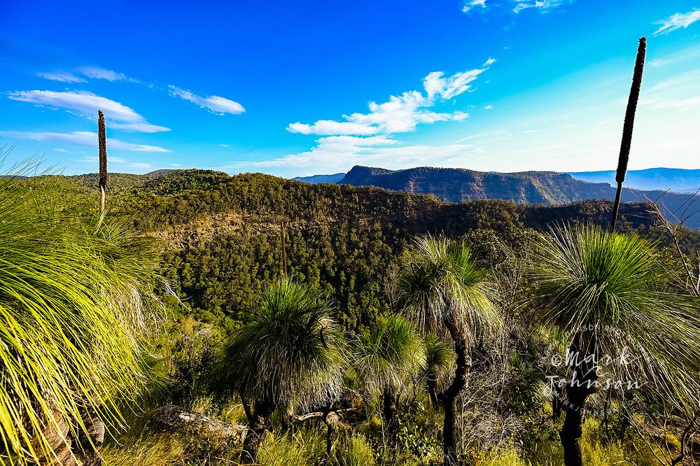 Grass Trees, Python Rock Track, Green Mountains, Lamington National Park, Gold Coast Hinterland, Queensland, Australia