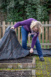 Covering a vegetable bed with a plastic membrane in order to suppress weeds and warm up the soil