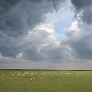 Wildlife on the Serengeti Plains in Masai Mara National Reserve, Kenya, Africa.