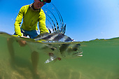 Roosterfish Stock Photos