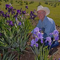 Bozeman, Montana gardener Donald Heyden checks on Iris plants he grows and sells to raise funds for charity.  He raises most of the income selling rhizomes (rather than short-lived flowers) to clients across the country.