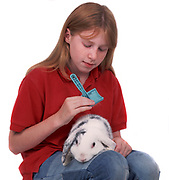 Young girl grooming rabbit whilst sitting on lap, model release, age 10-11 years old