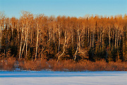 Forested shoreline on Lake of the Woods in winter<br />