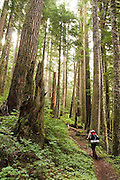 Brian Doehle hikes alone through beautiful old-growth forest on the North Fork Sauk River Trail in Glacier Peak Wilderness, Washington, on the way to Glacier Peak.